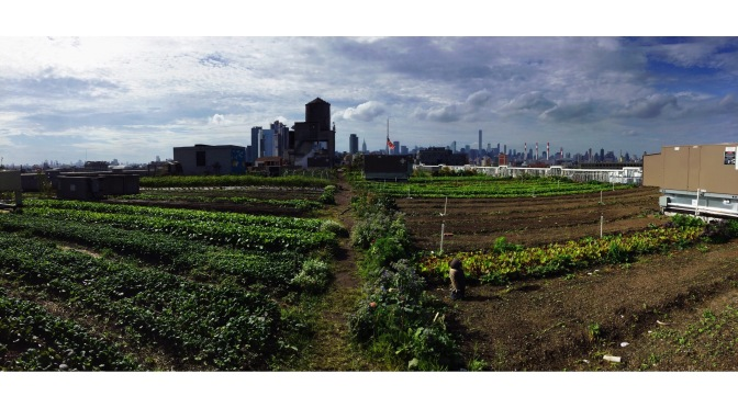 Un aprés midi à la ferme Brooklyn Grange