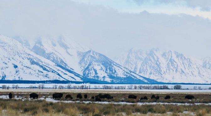 3 days in Jackson Hole, Wyoming
