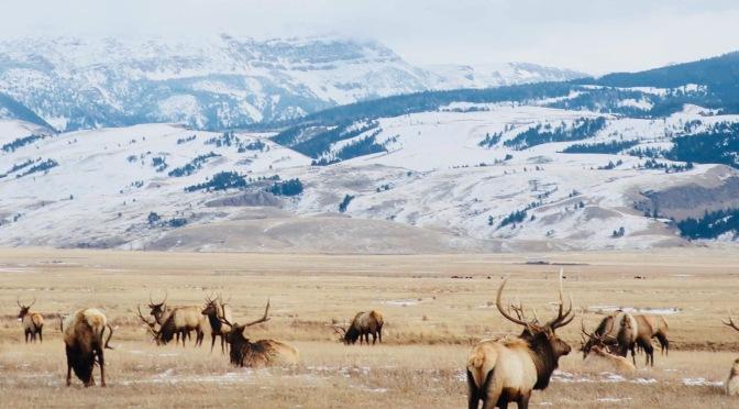 3 jours à Jackson Hole dans le Wyoming